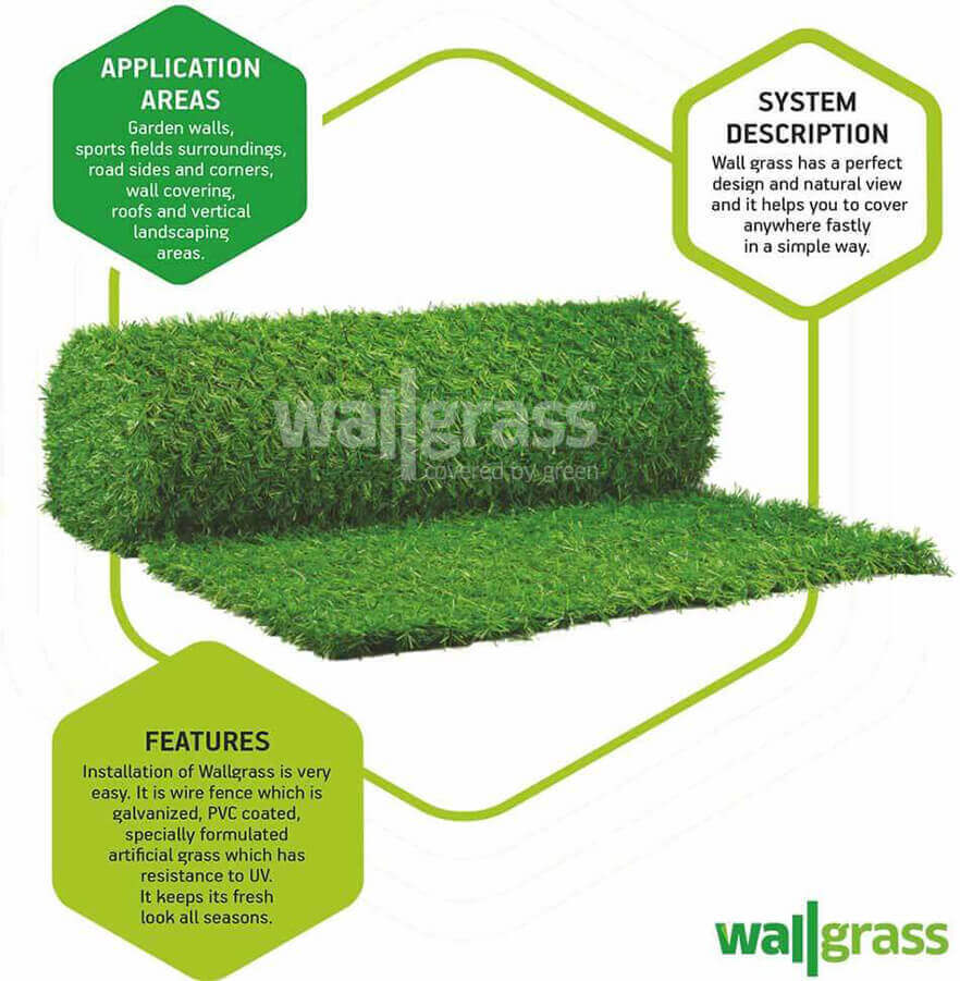 What is Leaf Wallgrass? Where to Use? What are the Features?